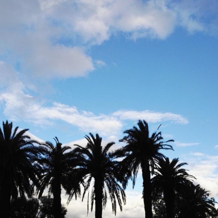 Melbourne palms